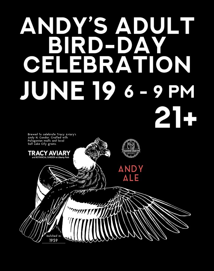 Andy's Adult Bird-Day Celebration