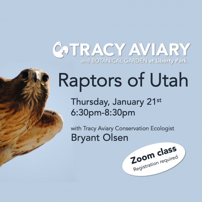 Raptors of Utah: Virtual Class