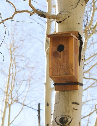 Build a Rosy-finch Bird Feeder