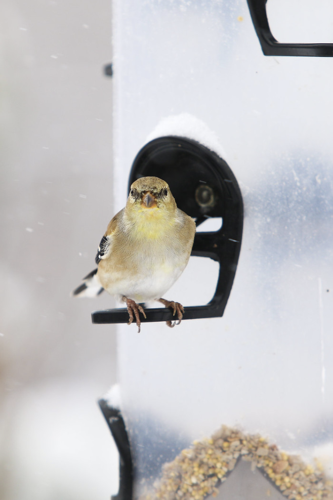 Empty Nesters Lunchtime Lectures: What to Feed Winter Birds
