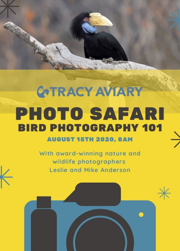 Photo Safari: Bird Photography 101 (POSTPONED)