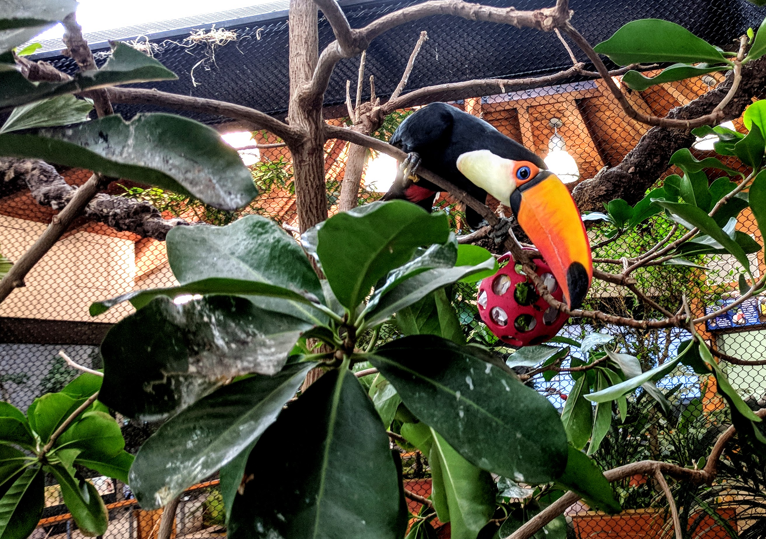 toucan holey roller