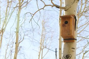Tracy Aviary Conservation: Alta Nest Box Hikes