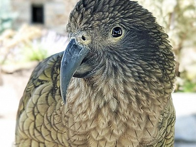 Meet Ikaroa: Our Newest Kea Bachelorette