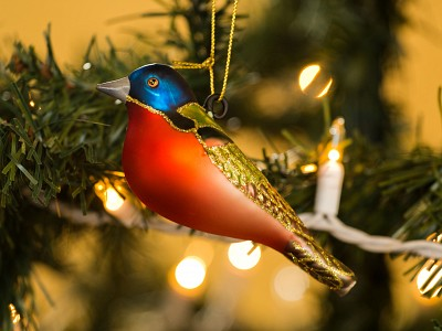 Tracy Aviary's Guide to Gifts that Give Back